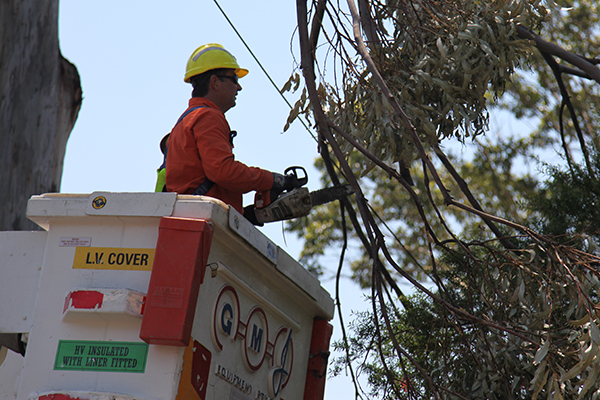 Ausgrid crews clearing branches after the storm