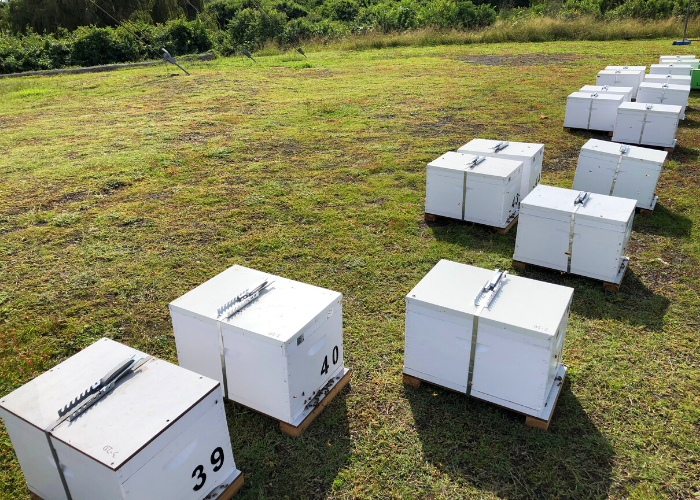 Ausgrid partners with AgTech company Bee Innovative to house bees on its land in Newcastle